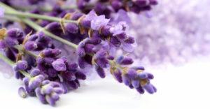 Lavender Homeopathy